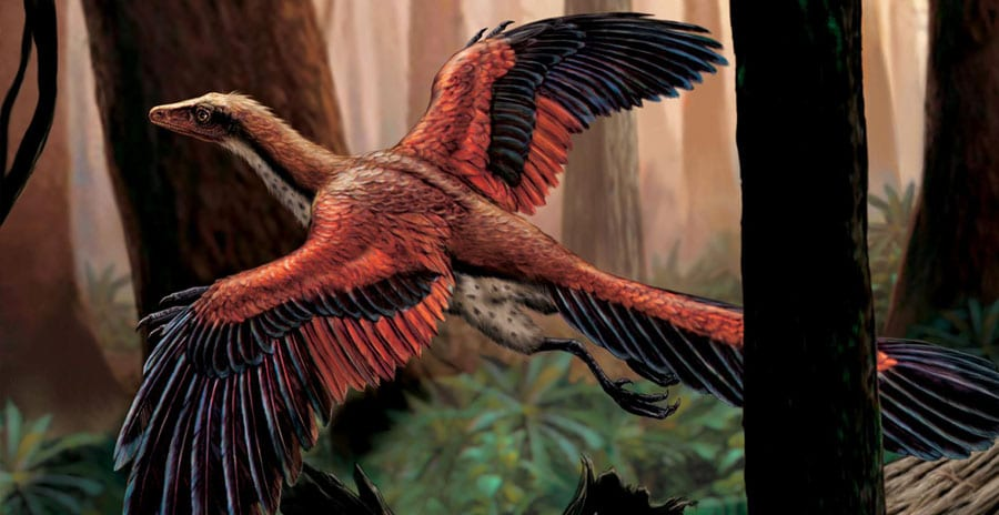 Did Flying Dinosaurs Have Feathers?